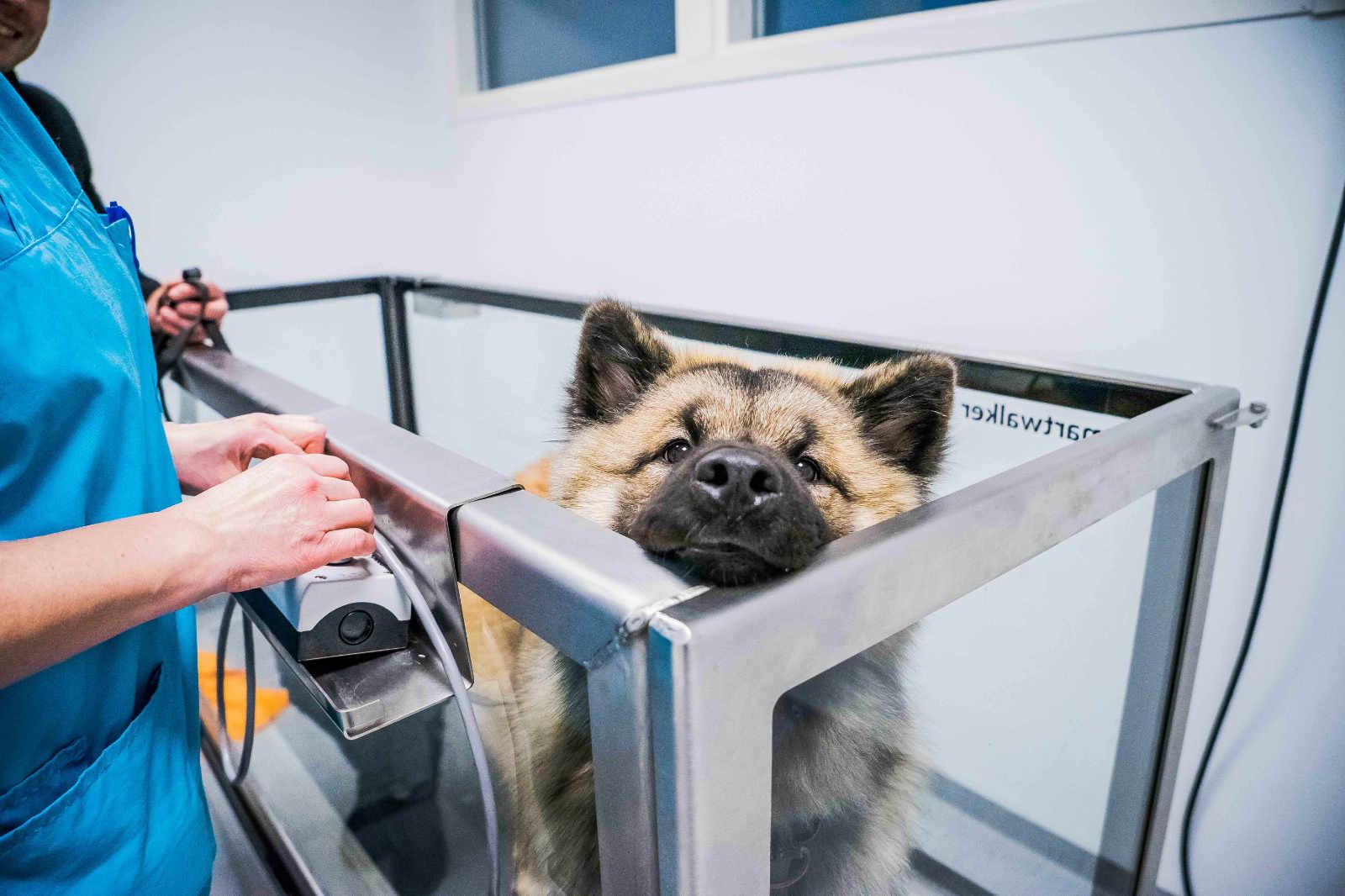 Veterinärklinik i Växjö rehab friskvård