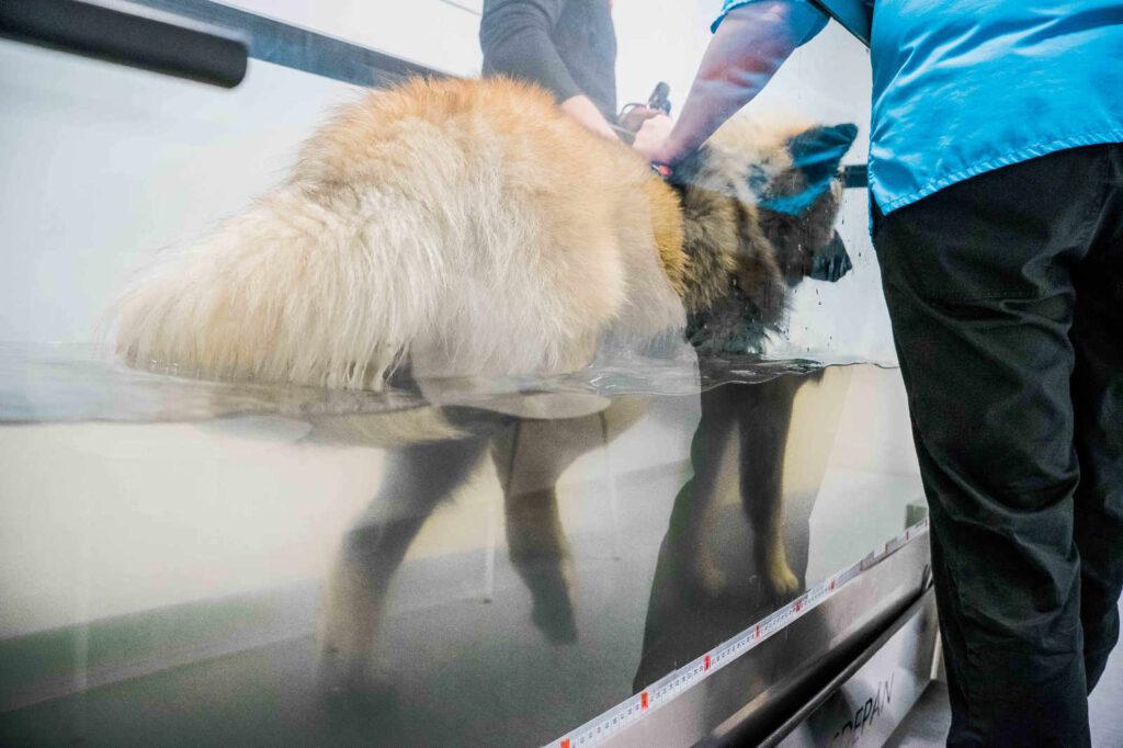 Waterwalker veterinärklinik i växjö
