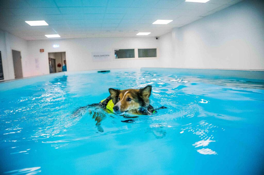 Hundsim. Bild som föreställer en hund som badar på veterinärkliniken i Växjö. Bredvid står några olika exempel på dåliga textbeskrivningar ( DSC05981.jpg, Foto; Victoria Ben-Chivar)